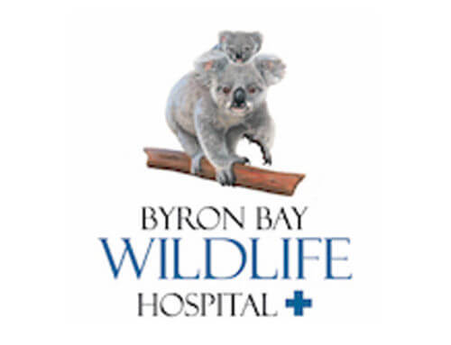 Medistar donates Clarius HD VetC7 Scanner to Byron Bay Wildlife Hospital